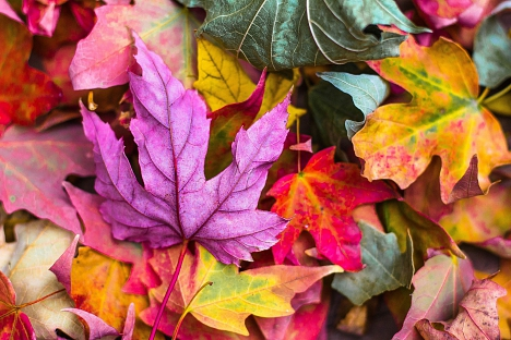 Herbst©Grundschule Leese