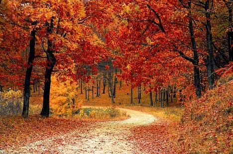 Herbstferien©Grundschule Leese